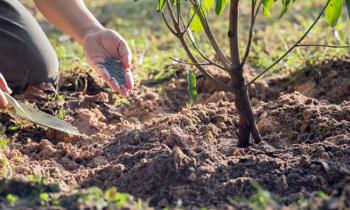 Особенности посадки плодовых растений в летний период